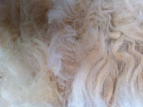 Alpaca Raw (Unwashed) Fleece 200g