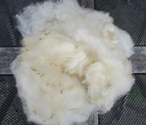 Exmoor Horn Raw (Unwashed) Fleece 200g