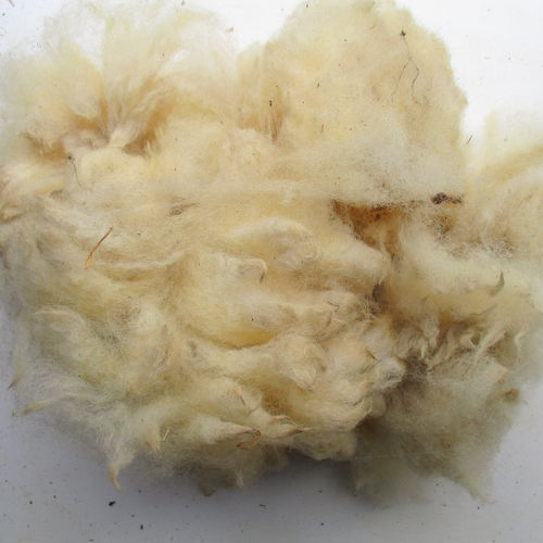 White Ryeland Raw (Unwashed) Fleece 200g
