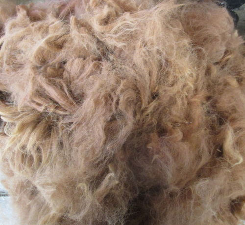 Alpaca Raw (Unwashed)  Fawn Fleece 200g