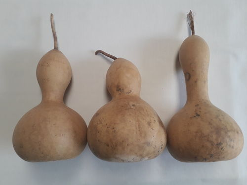 Dried and Washed Medium Sized Gourds - Set of Three