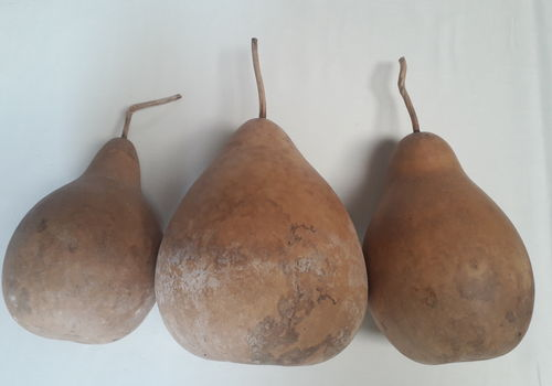 Dried and washed medium Pear Gourds set of Three
