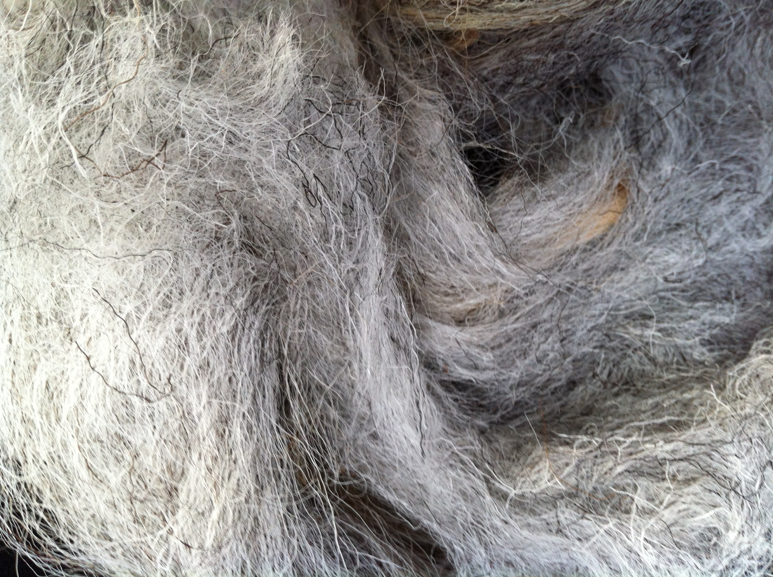 Herdwick_washed_fleece_detail